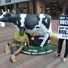 Moooving Scene on Church Street: PETA Activists Say No to Cow's Milk