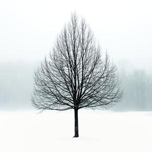 "COURTESY OF EDGEWATER GALLERY - ""Tree in Fog"" by Jon Olsen"