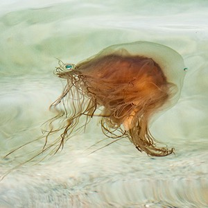 "COURTESY OF T.W. WOOD GALLERY - ""Jellyfish,"" photograph by Kay Jostrand"