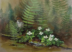 "COURTESY OF CENTRAL VERMONT MEDICAL CENTER - ""Wood Thrush and Bunchberry Blossoms"" by Susan Bull Riley"