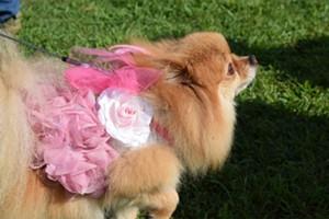 puppies_pooches_on_parade1-calendar-spotlight-ravin.jpg