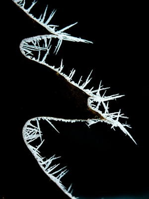 """COURTESY OF MEETING HOUSE ARTS - """"Frost on a Red Oak Leaf,"""" photograph by John Snell"""