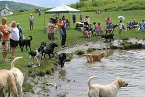 dog_mountain_founders_celebration_dog_party-calendar-spotlight-williams.jpg