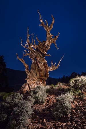 """COURTESY OF DARKROOM GALLERY - """"Tree Monster"""" by Lance Keimig"""