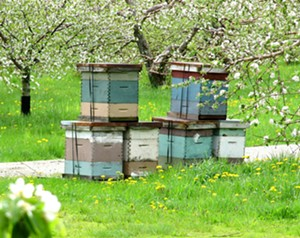 sun.11_agriculture_bee_here_now.jpg