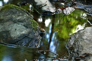 """COURTESY OF STEVEN JUPITER GALLERY - Untitled photograph from the """"Hubbardton Creek"""" series by Steven Jupiter"""