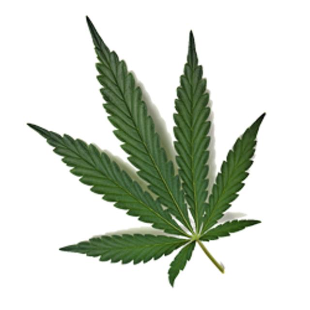 potplant.png