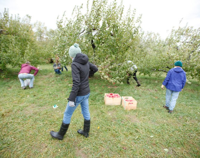 Weed Dating participants at Shelburne Orchards - JORDAN SILVERMAN