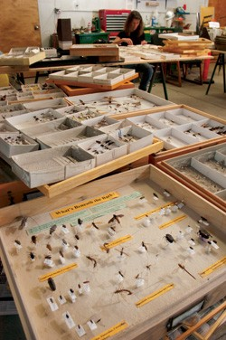 What remains of the state's official insect reference collection - MATTHEW THORSEN