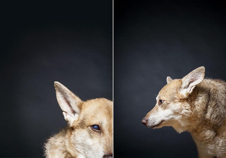juddlamphere-olddogs-7.jpg