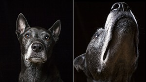 With Photographer Judd Lamphere, Old Dogs Get Their Day ... in the Studio