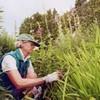 Work: Birgit Deeds, Shelburne Farms gardener