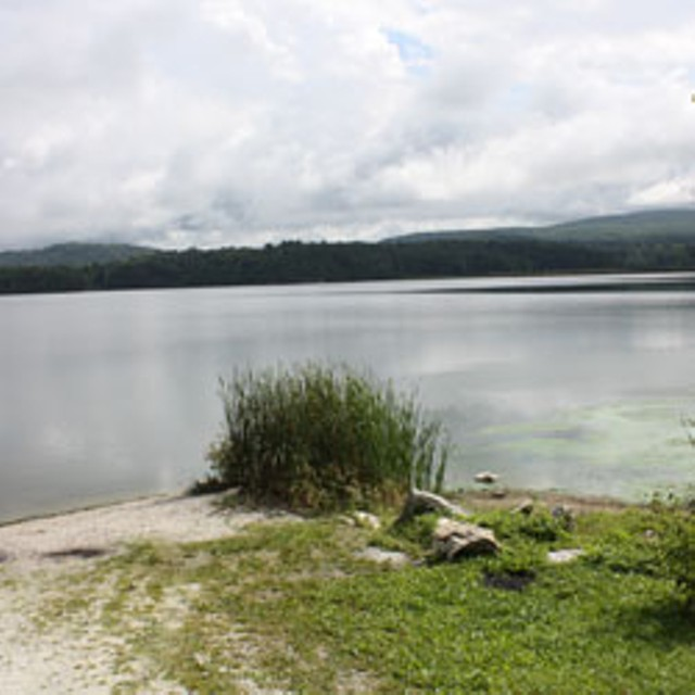 Wtf why don 39 t people swim in shelburne pond wtf for Pond reeds for sale