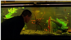 Yes, they're just teasing us with that octopus shot.
