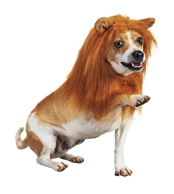 doggie_lion.jpg