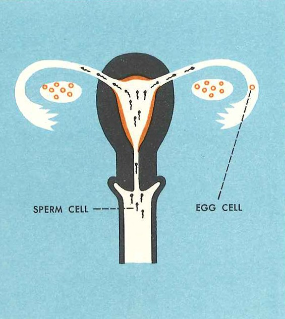 studies_in_crap_gift_of_life_sperm_cell.jpg