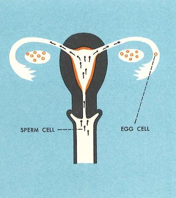 studies_in_crap_gift_of_life_sperm_cell.jpg