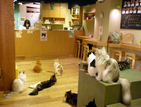 A cat café in Osaka, Japan. - THE WANDERING WITCH GIRL (FLICKR.CREATIVECOMMONS USER)