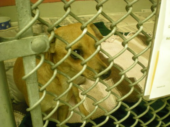 A nervous little guy peers out from his pen - JOE ESKENAZI