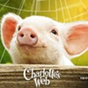 Hidden Video Shows Pigs Thrown, Mutilated, and Confined