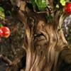 Cops Arrest Alleged Tree Bully