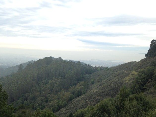 A view that includes Side-O, one of the illegal mountain bike trails on UC Berkeley land.