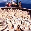 California Senate Passes the Shark's Fin Ban