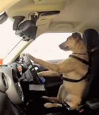 Actually, he is better than a lot of drivers on the road