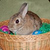 """Animal Control Bunny """"Raid"""" Means No Easter Bunnies For You"""