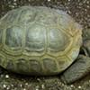 Arthur the Stolen Tortoise Returned to San Francisco's Randall Museum