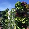 AT&T Park Has a New Garden Behind Center Field