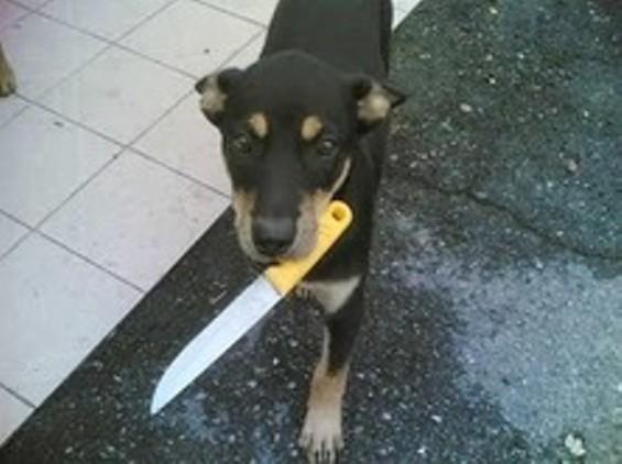 Bad dog! Bad dog!