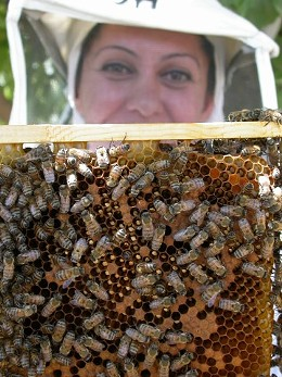 Bees without borders.