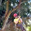 Best North American Tree-Climbing Champion