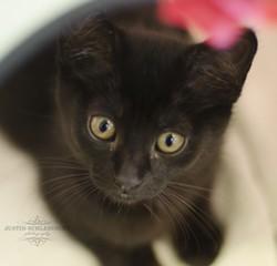 Elena would like to live with you - SPCA