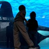 """Blackfish"": Maybe Humans and Killer Whales Can't Play Together"