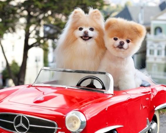 boo_red_car.jpg