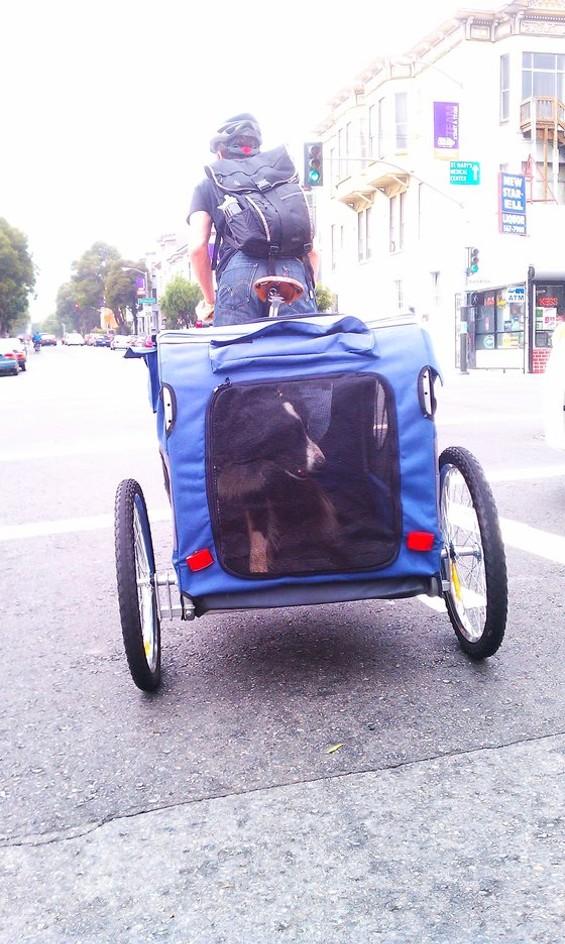 rsz_bike_dog.jpg