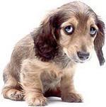 sad_dog_resized.jpg