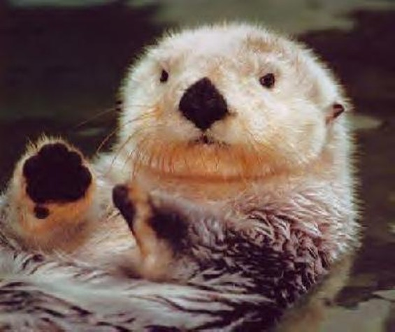 sea_otter.jpg