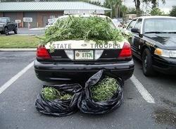 marijuana_illegal_thumb_250x183_thumb_250x183.jpg