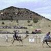 Camel Jockeys of the Sierra Nevada