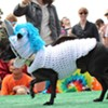 "Canine Costume Contest: Bulldog and ""Donkey"" Take the Whole Enchihuahua"