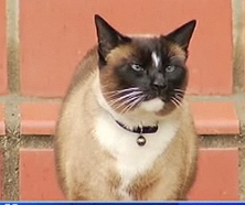 Cat burlgar purrr-loins items from his neighbors