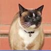 Kleptomaniac Cat Strikes Again (video)