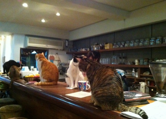 Cat café in Taipei, Taiwan - MIAOUROCK (FLICKR.CREATIVECOMMONS USER)
