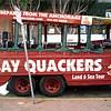 Clash of the Quackers