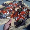 Tamales La Oaxaquena's Mole Chicken Tamal