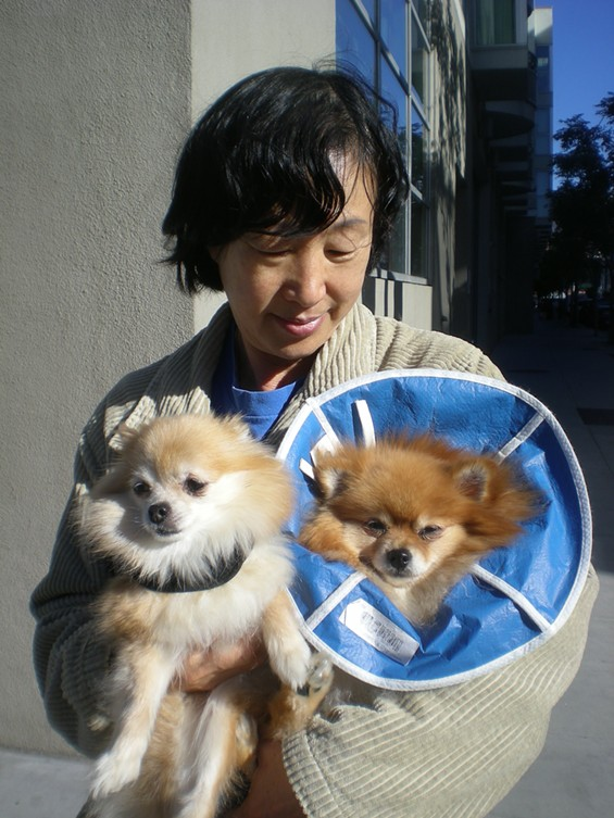 Coco, left, Patty, right, and owner Yuen Byun out for their morning constitutional - JOE ESKENAZI