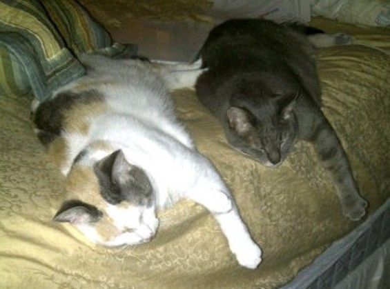 synchronized_sleeping.jpg